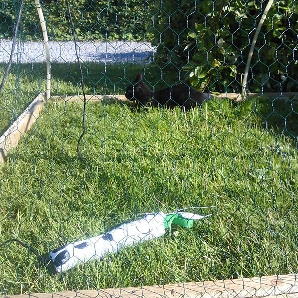 på græs