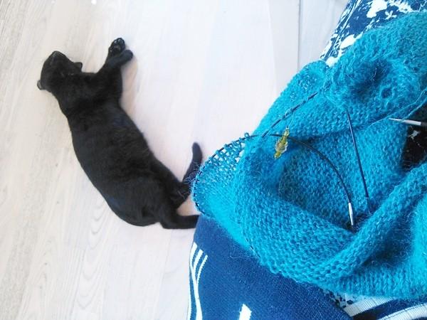 strik med kat pa sidelinjen