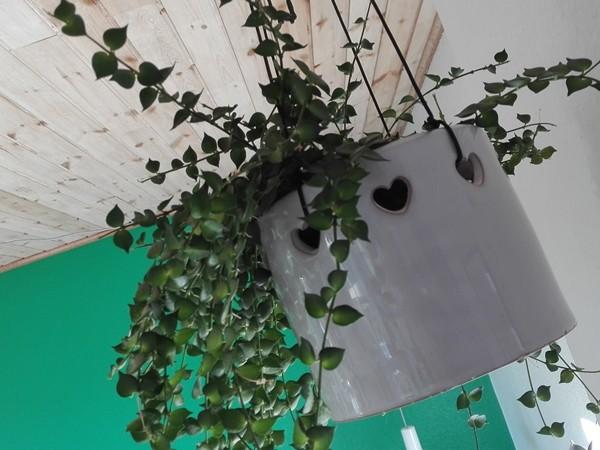 hængende grønt 3